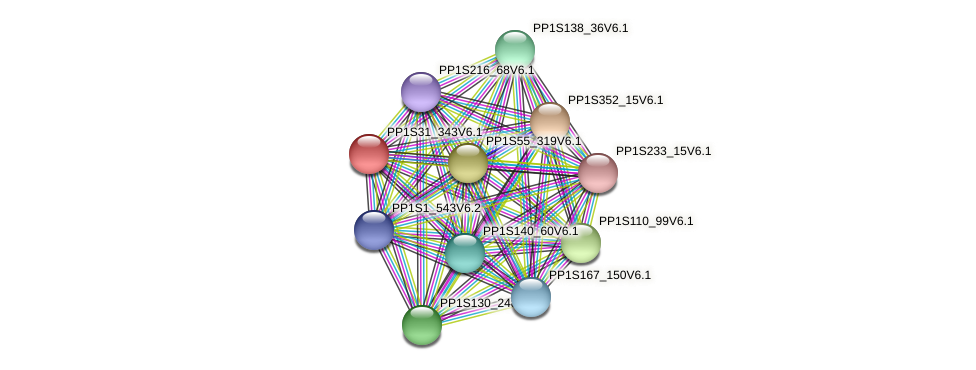 PP1S31_343V6.1 protein (Physcomitrella patens) - STRING interaction network
