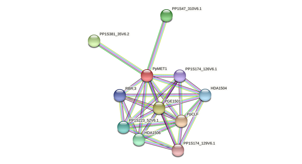 PpMET1 protein (Physcomitrella patens) - STRING interaction network