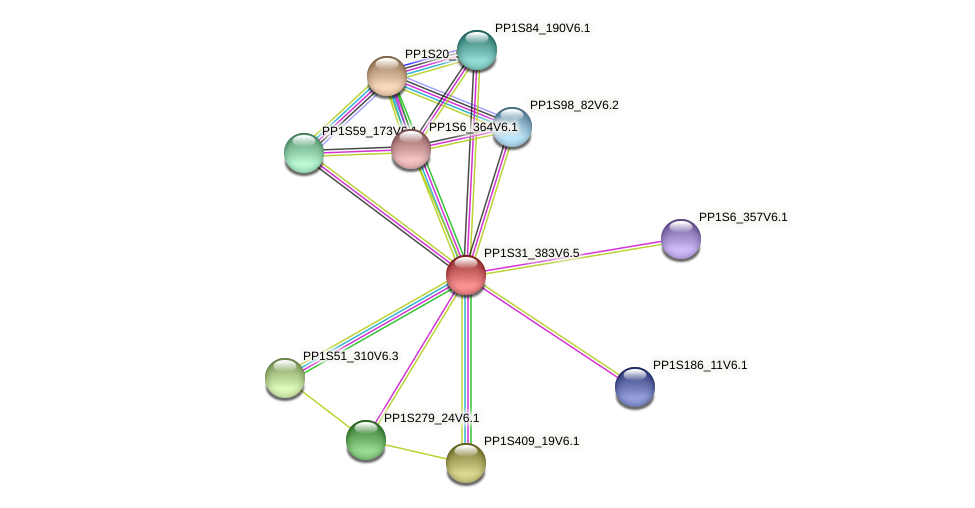 PP1S31_383V6.1 protein (Physcomitrella patens) - STRING interaction network