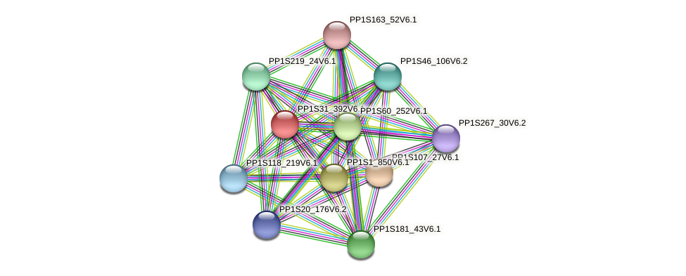 PP1S31_392V6.1 protein (Physcomitrella patens) - STRING interaction network