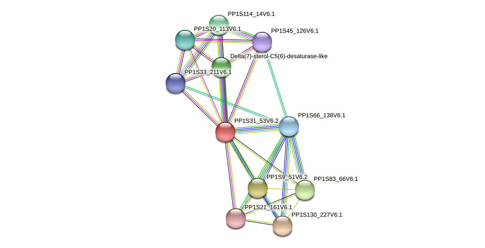 PP1S31_53V6.1 protein (Physcomitrella patens) - STRING interaction network