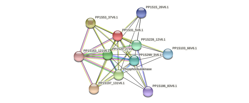 PP1S31_5V6.1 protein (Physcomitrella patens) - STRING interaction network