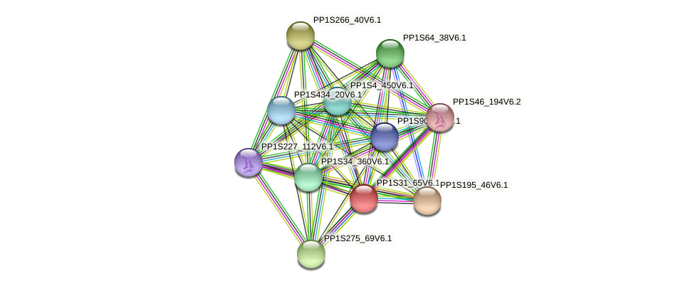 PP1S31_65V6.1 protein (Physcomitrella patens) - STRING interaction network