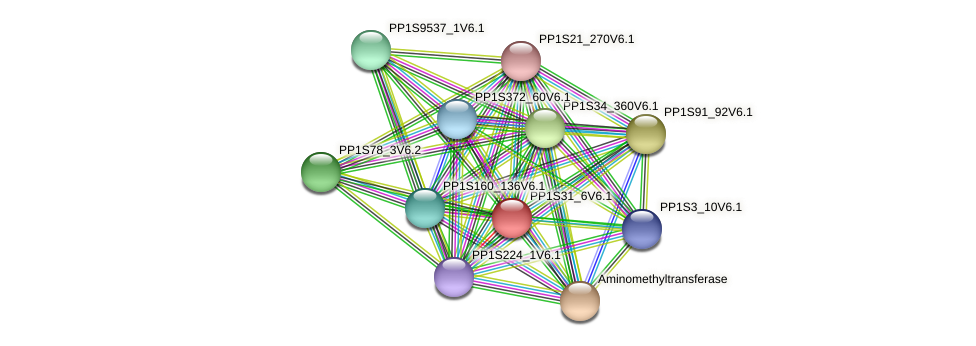 PP1S31_6V6.1 protein (Physcomitrella patens) - STRING interaction network