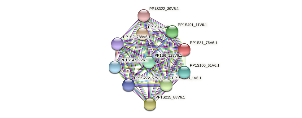 PP1S31_76V6.1 protein (Physcomitrella patens) - STRING interaction network