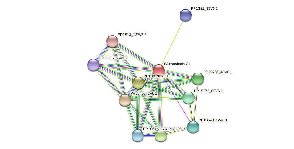 PP1S321_10V6.1 protein (Physcomitrella patens) - STRING interaction network