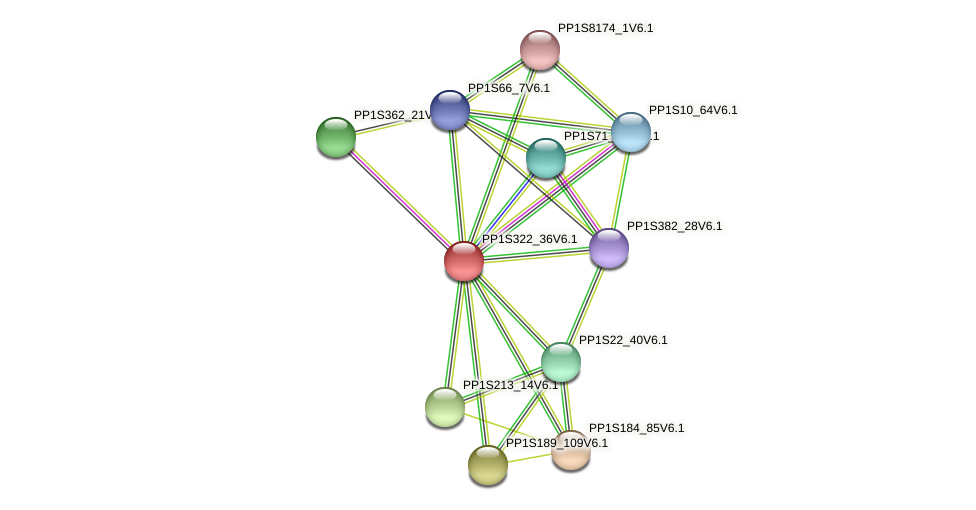 PP1S322_36V6.1 protein (Physcomitrella patens) - STRING interaction network