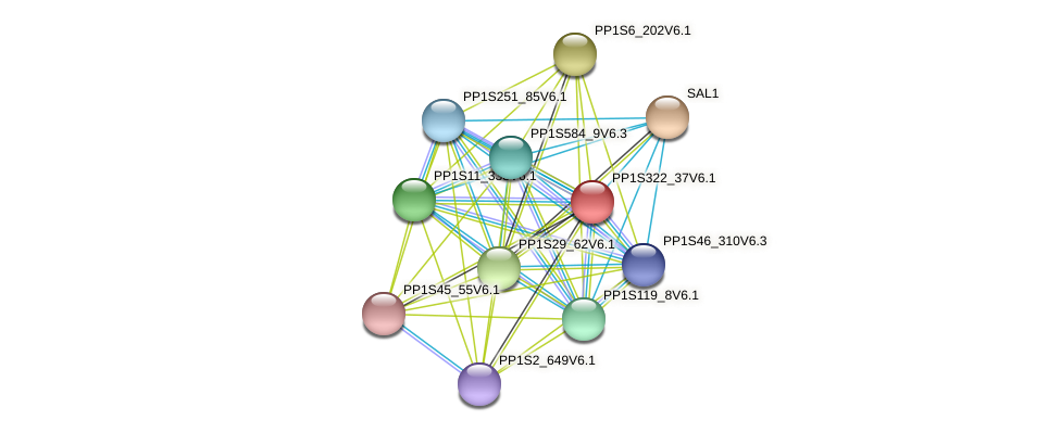 PP1S322_37V6.1 protein (Physcomitrella patens) - STRING interaction network