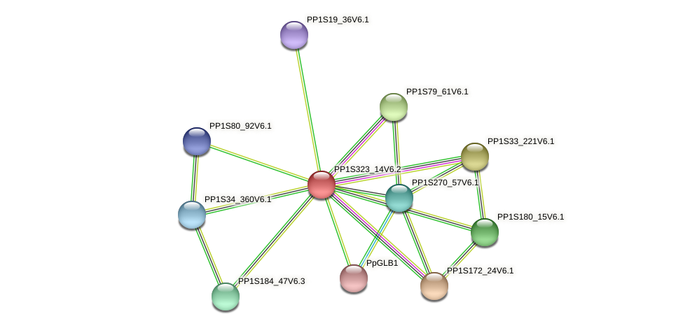 PP1S323_14V6.2 protein (Physcomitrella patens) - STRING interaction network