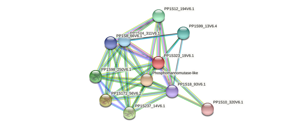 PP1S323_19V6.1 protein (Physcomitrella patens) - STRING interaction network