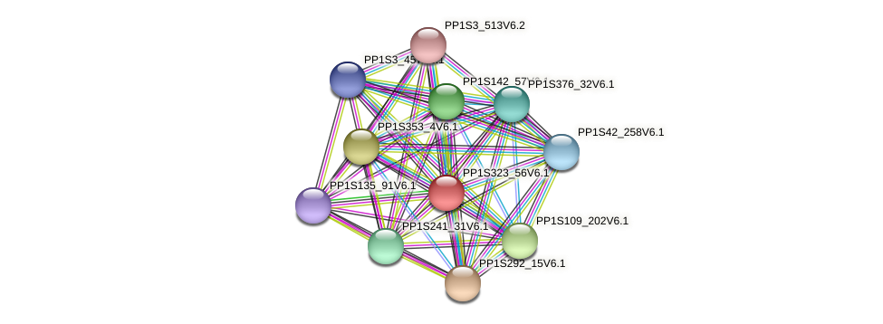 PP1S323_56V6.1 protein (Physcomitrella patens) - STRING interaction network