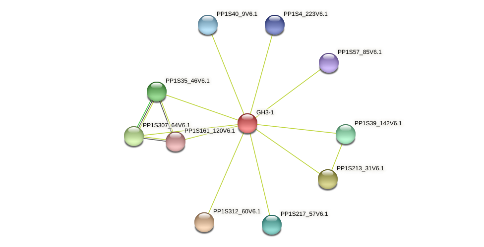 GH3-1 protein (Physcomitrella patens) - STRING interaction network