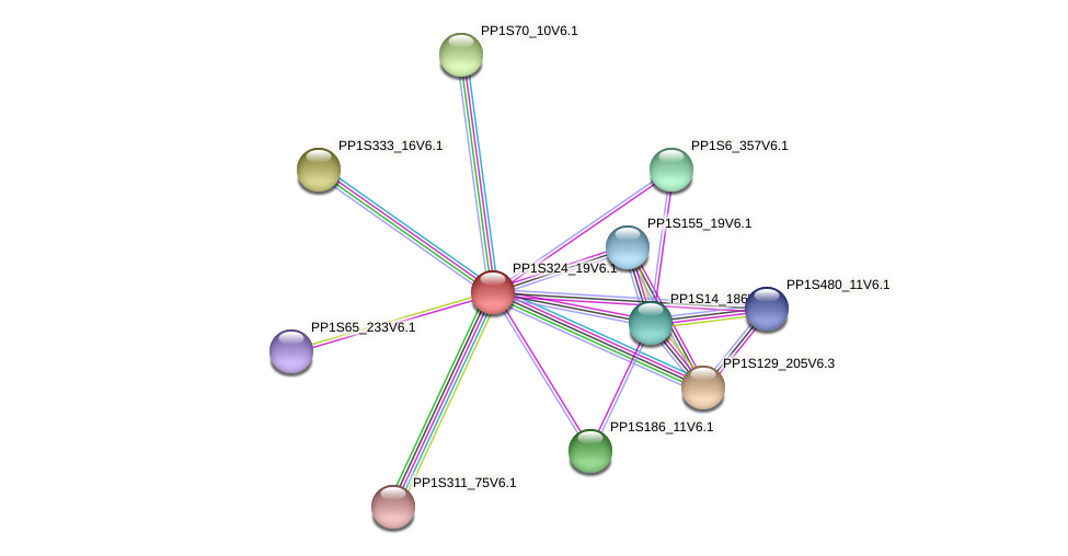 PP1S324_19V6.1 protein (Physcomitrella patens) - STRING interaction network