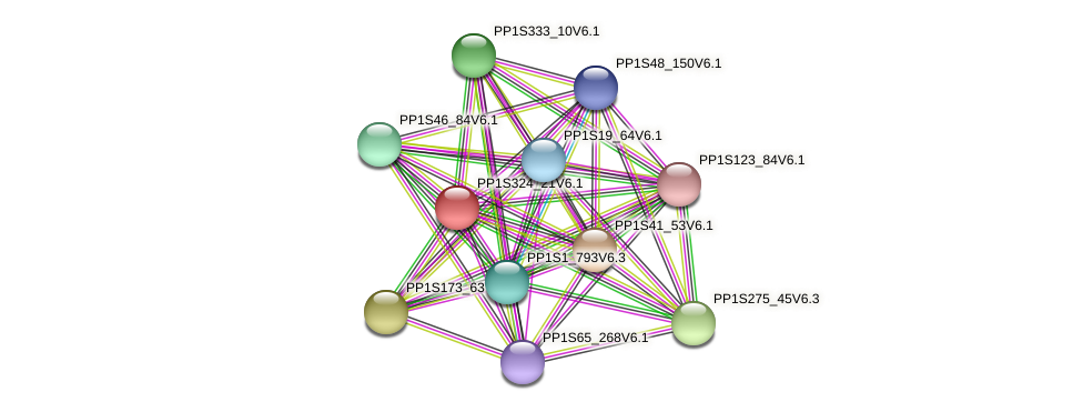 PP1S324_21V6.1 protein (Physcomitrella patens) - STRING interaction network