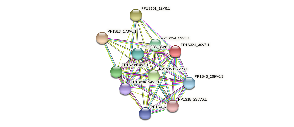 PP1S324_39V6.1 protein (Physcomitrella patens) - STRING interaction network