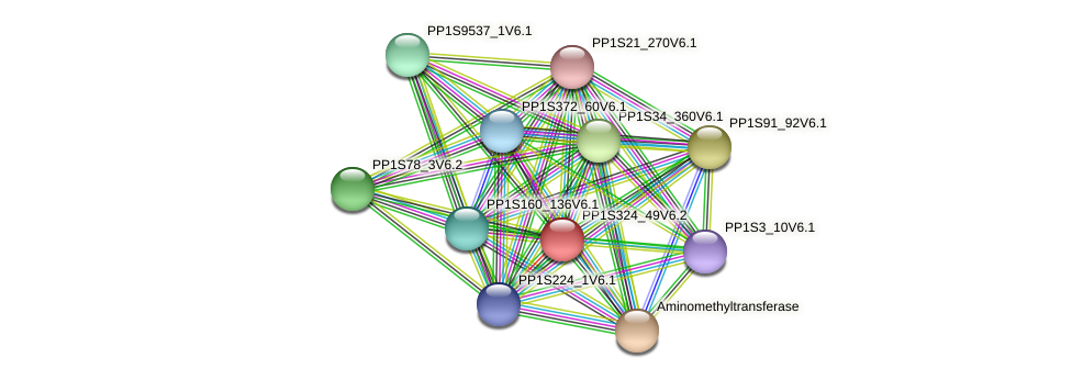 PP1S324_49V6.2 protein (Physcomitrella patens) - STRING interaction network