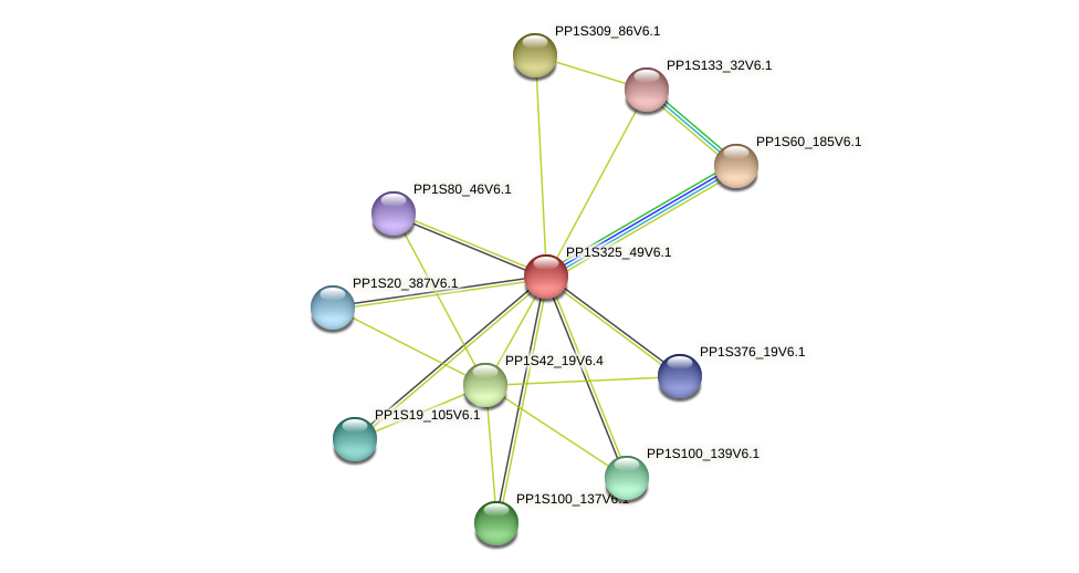 PP1S325_49V6.1 protein (Physcomitrella patens) - STRING interaction network