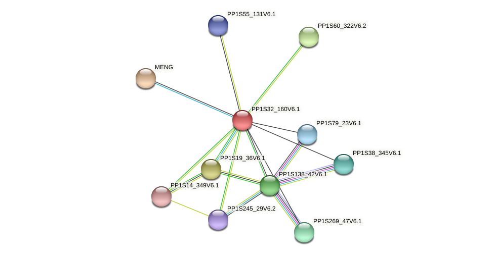PP1S32_160V6.1 protein (Physcomitrella patens) - STRING interaction network