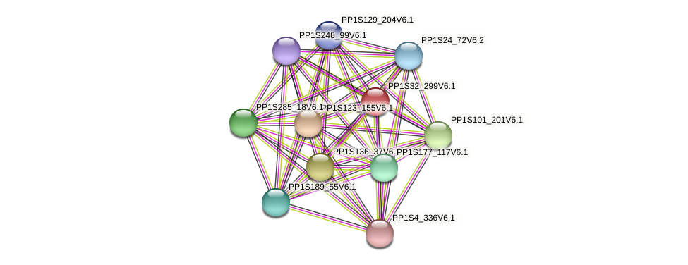 PP1S32_299V6.1 protein (Physcomitrella patens) - STRING interaction network