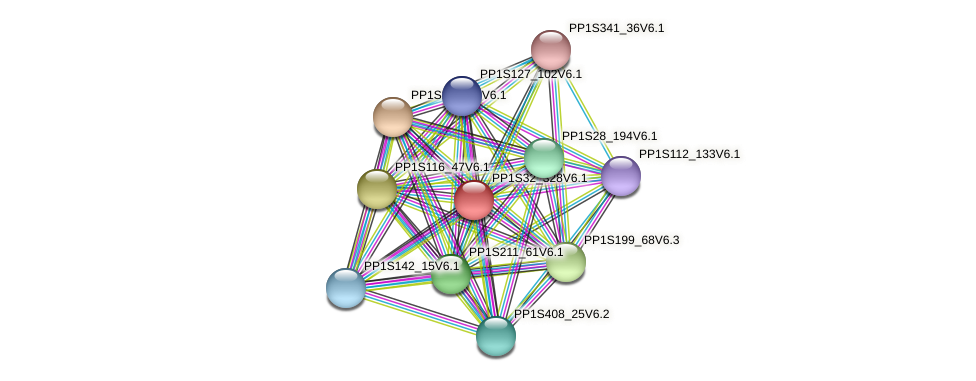PP1S32_328V6.1 protein (Physcomitrella patens) - STRING interaction network