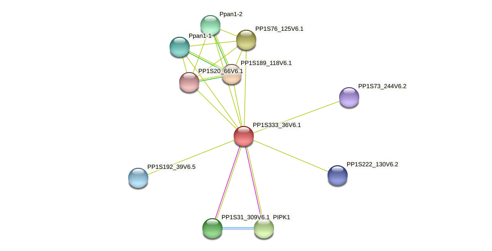 PP1S333_36V6.1 protein (Physcomitrella patens) - STRING interaction network