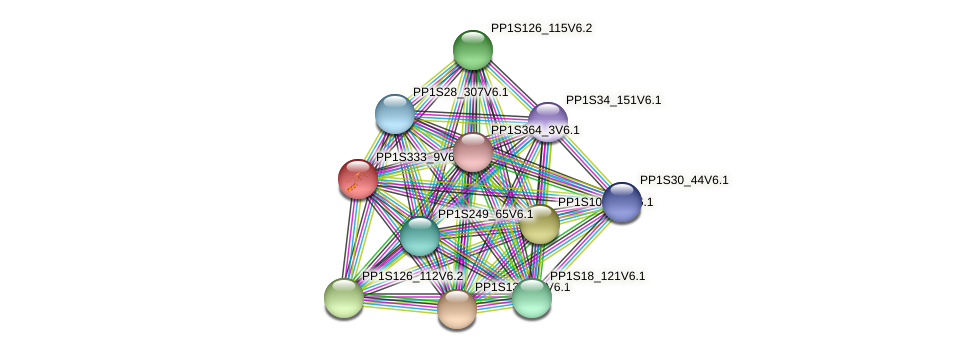 PP1S333_9V6.1 protein (Physcomitrella patens) - STRING interaction network