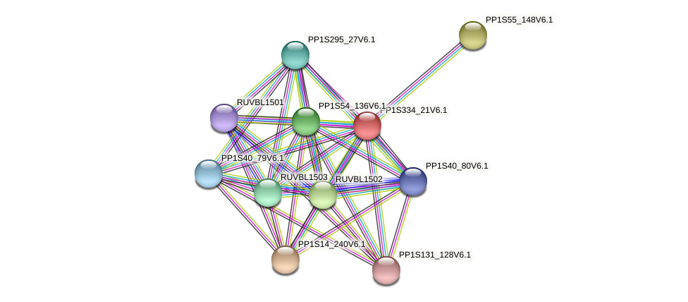 PP1S334_21V6.1 protein (Physcomitrella patens) - STRING interaction network