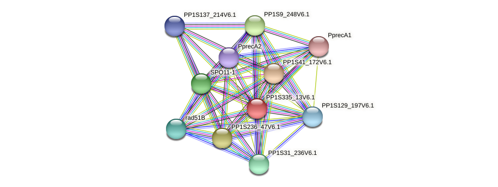 PP1S335_13V6.1 protein (Physcomitrella patens) - STRING interaction network