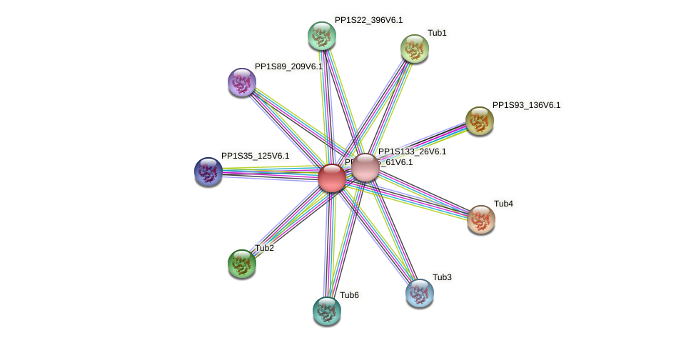 PP1S335_61V6.1 protein (Physcomitrella patens) - STRING interaction network