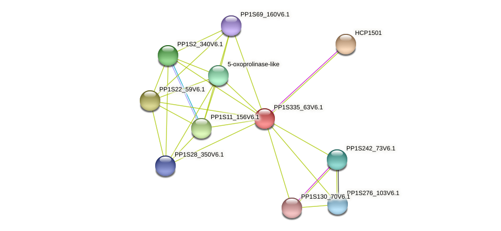 PP1S335_63V6.1 protein (Physcomitrella patens) - STRING interaction network