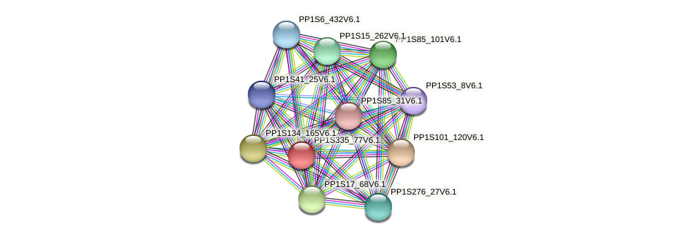 PP1S335_77V6.1 protein (Physcomitrella patens) - STRING interaction network