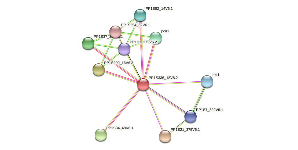 PP1S336_18V6.1 protein (Physcomitrella patens) - STRING interaction network