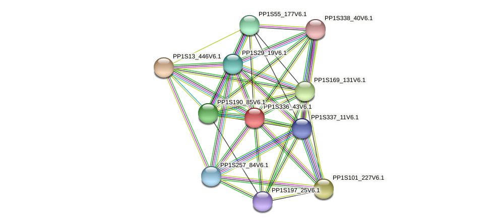PP1S336_43V6.1 protein (Physcomitrella patens) - STRING interaction network
