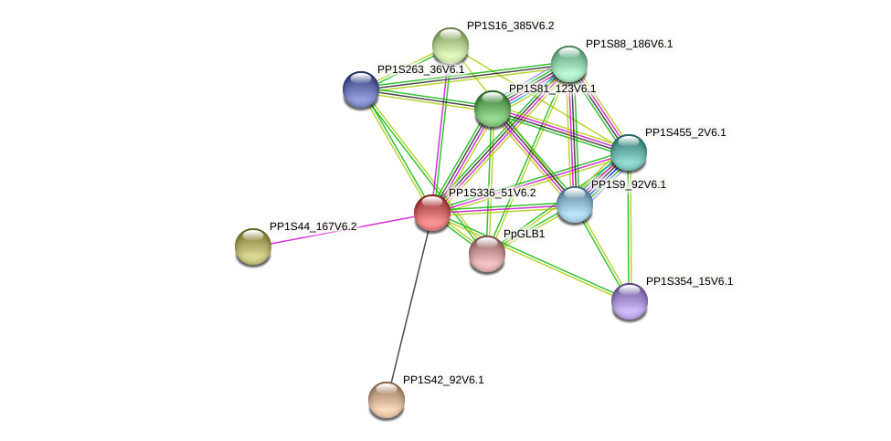PP1S336_51V6.1 protein (Physcomitrella patens) - STRING interaction network