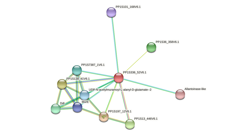 PP1S336_52V6.1 protein (Physcomitrella patens) - STRING interaction network