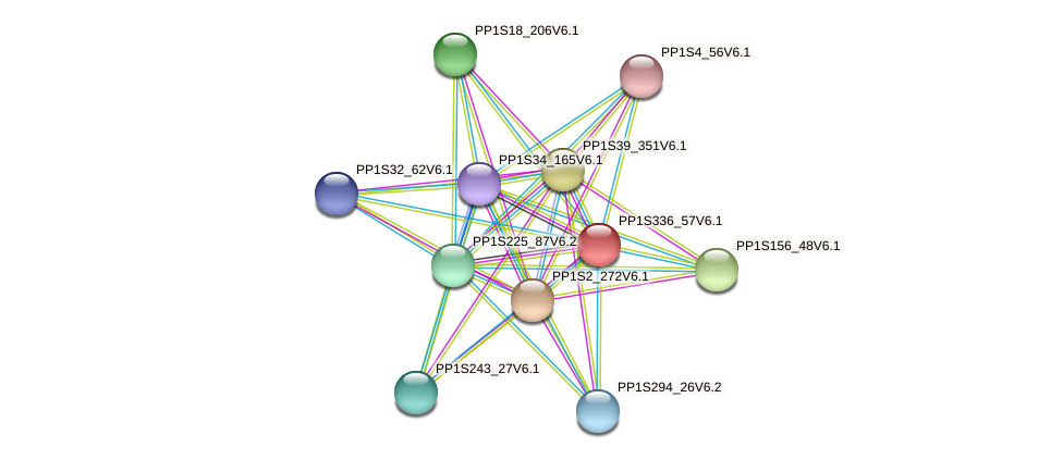 PP1S336_57V6.1 protein (Physcomitrella patens) - STRING interaction network