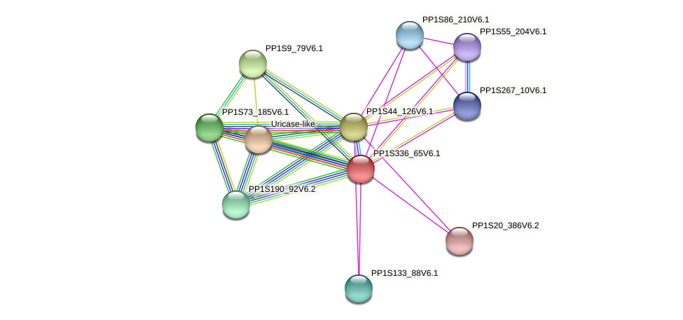 PP1S336_65V6.1 protein (Physcomitrella patens) - STRING interaction network