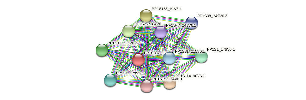 PP1S337_11V6.1 protein (Physcomitrella patens) - STRING interaction network