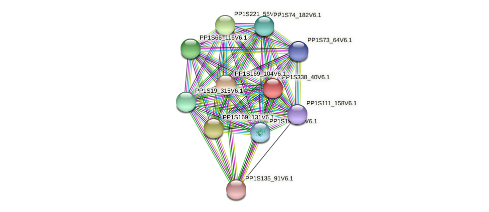PP1S338_40V6.1 protein (Physcomitrella patens) - STRING interaction network