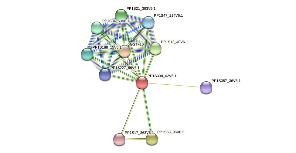 PP1S338_62V6.1 protein (Physcomitrella patens) - STRING interaction network