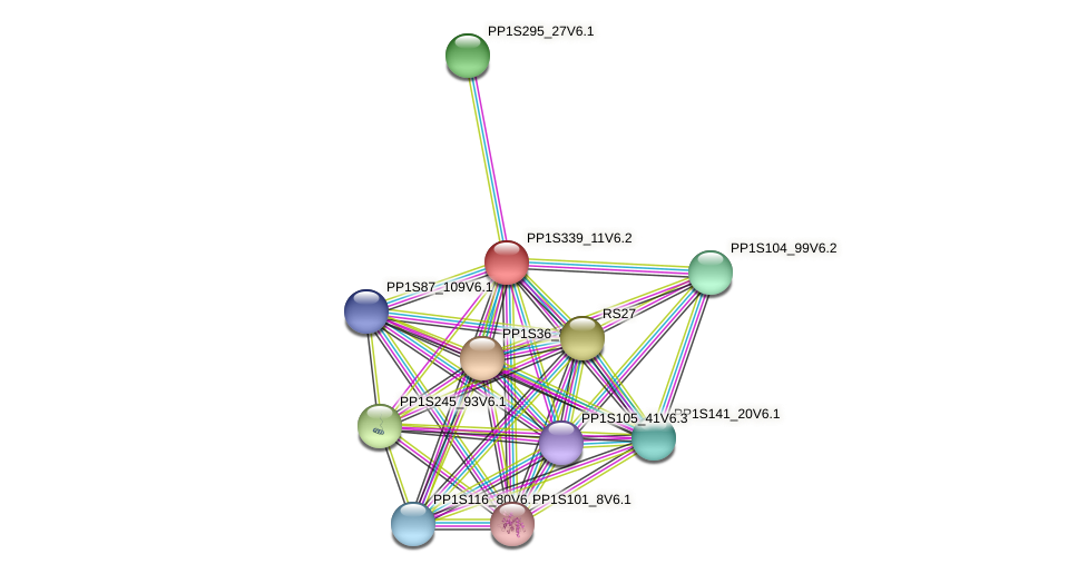 PP1S339_11V6.2 protein (Physcomitrella patens) - STRING interaction network