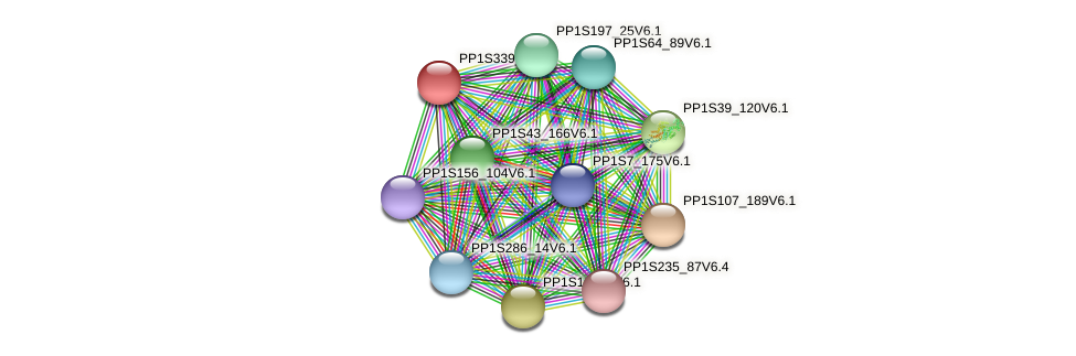 PP1S339_3V6.1 protein (Physcomitrella patens) - STRING interaction network