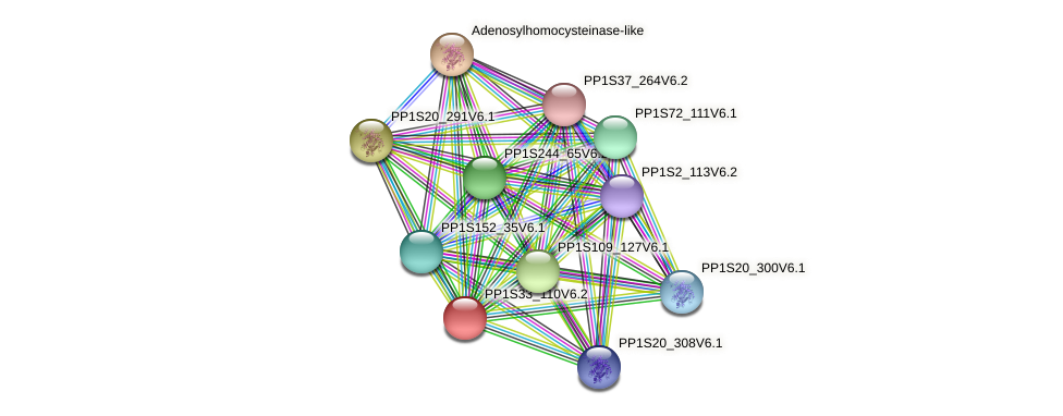 PP1S33_110V6.1 protein (Physcomitrella patens) - STRING interaction network