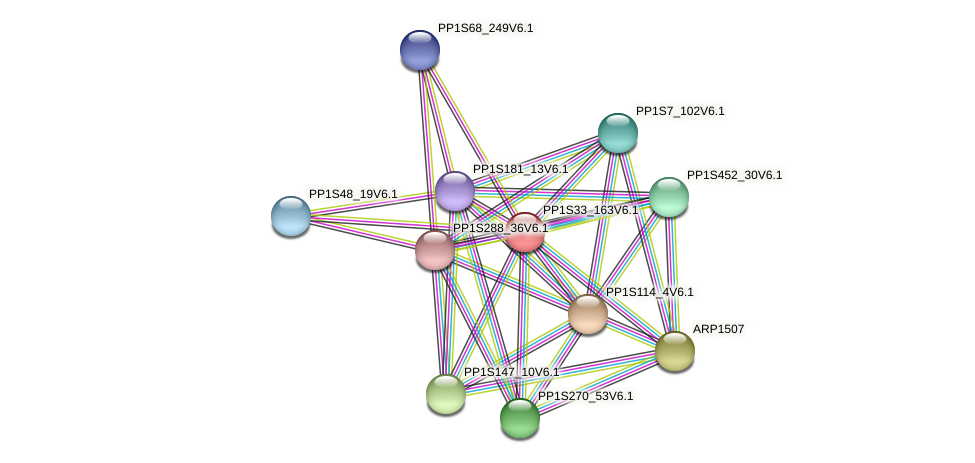 PP1S33_163V6.1 protein (Physcomitrella patens) - STRING interaction network