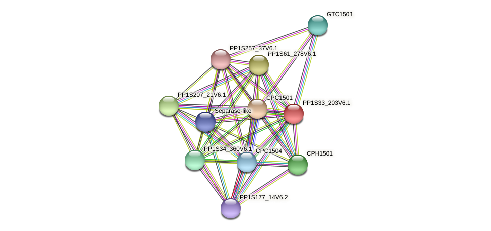 PP1S33_203V6.1 protein (Physcomitrella patens) - STRING interaction network