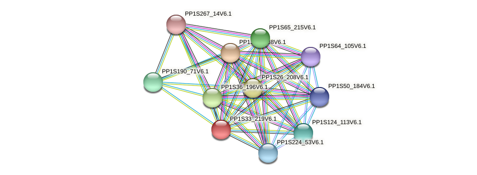 PP1S33_219V6.1 protein (Physcomitrella patens) - STRING interaction network