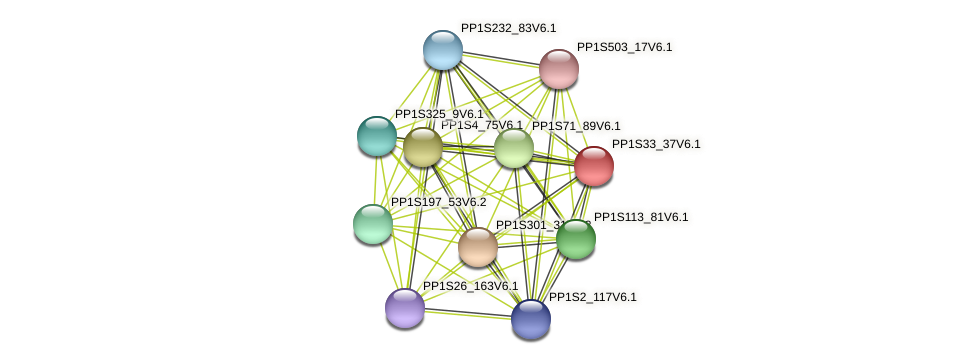 PP1S33_37V6.1 protein (Physcomitrella patens) - STRING interaction network