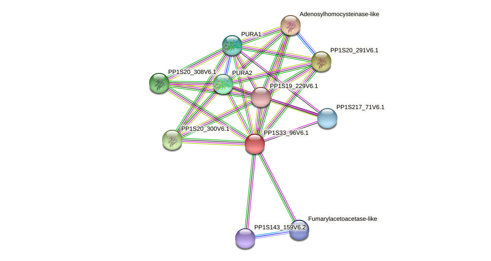 PP1S33_96V6.1 protein (Physcomitrella patens) - STRING interaction network