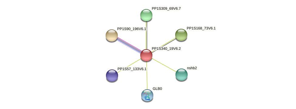 PP1S340_19V6.1 protein (Physcomitrella patens) - STRING interaction network