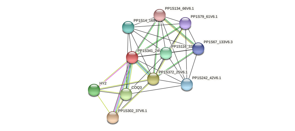 PP1S341_24V6.1 protein (Physcomitrella patens) - STRING interaction network